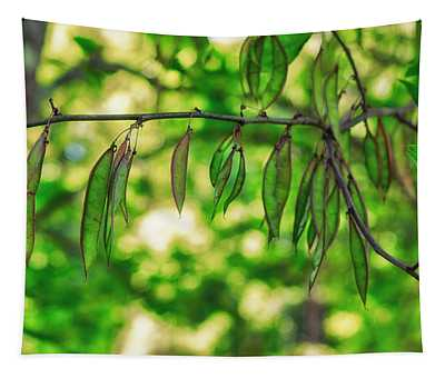 Green Redbud Seed Pods Tapestry