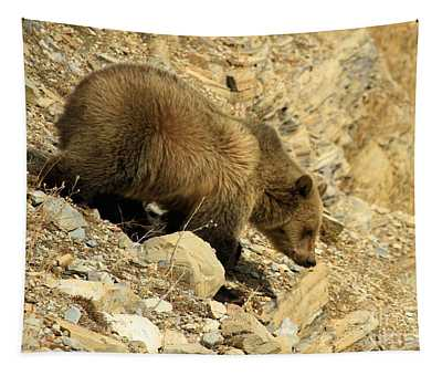 Grizzly On The Rocks Tapestry
