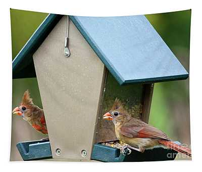Juvenile Cardinals On Feeder Tapestry