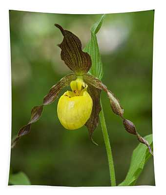 Large Yellow Lady Slipper Orchid Dspf0251 Tapestry