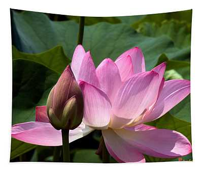 Lotus Bud--here Is How You Do It Dl065 Tapestry