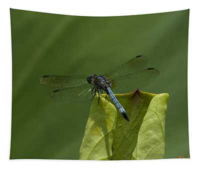 Lotus Leaf And Blue Dasher Dragonfly Dl058 Tapestry