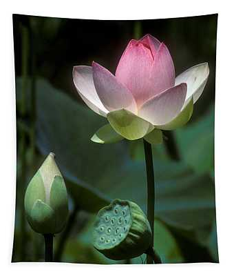 Lotus--stages Of Life I 24q Tapestry