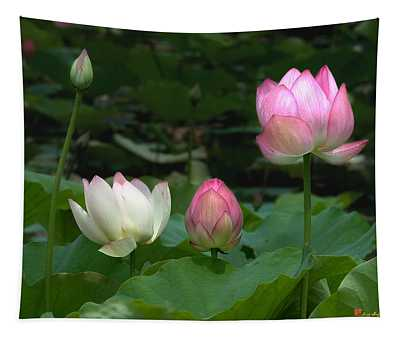 Lotus--stages Of Life II Dl024 Tapestry