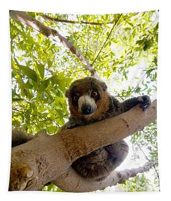 Mongoose Lemur Tapestry