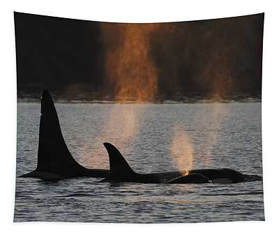 Tapestry featuring the photograph Orcas Resident Pod Spouting by Hiroya Minakuchi