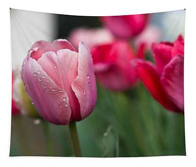 Pink Tulips With Water Drops Tapestry