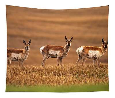 Pronghorn Antelope In A Cultivated Tapestry