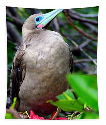 Red Footed Booby Tapestry