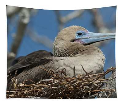 Red-footed Booby Sula Sula Sitting In A Tapestry