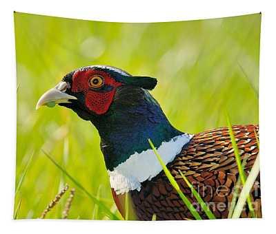 Ring Neck Pheseant Tapestry