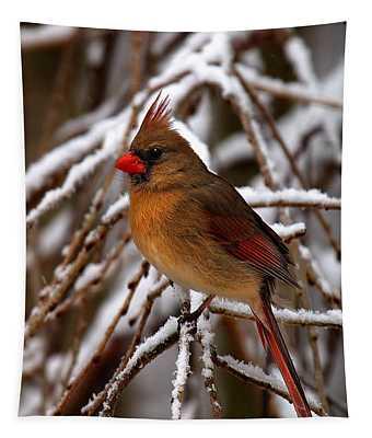 Snowbirds--cardinal Dsb025 Tapestry