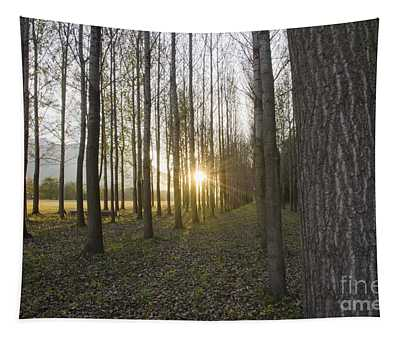 Sunlight In The Forest Tapestry
