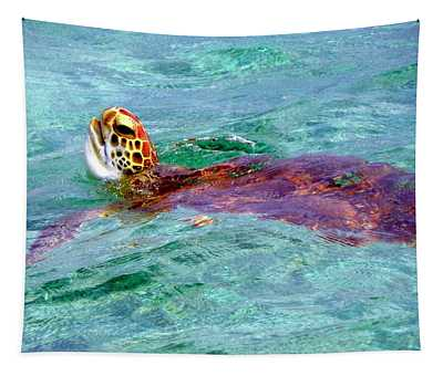 Turtle Time  Tapestry