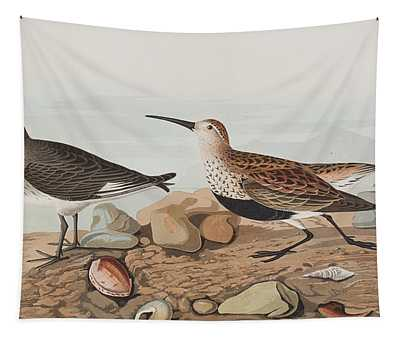 Red Backed Sandpiper Tapestry