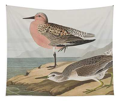 Red-breasted Sandpiper  Tapestry