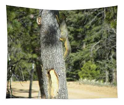 Squirrel Home Divide Co Tapestry