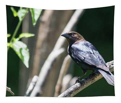 Brown-headed Cowbird Tapestry