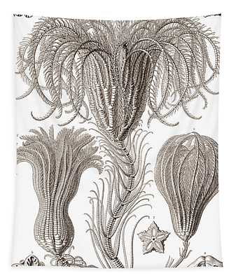 Crinoidea Tapestry