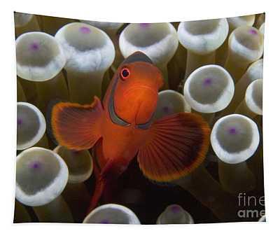 Indonesia, Marine Life Tapestry