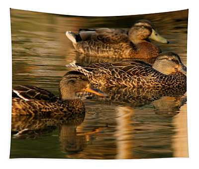 Mallards Swimming In The Water At Magic Hour Tapestry