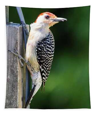 Red-bellied Woodpecker Tapestry