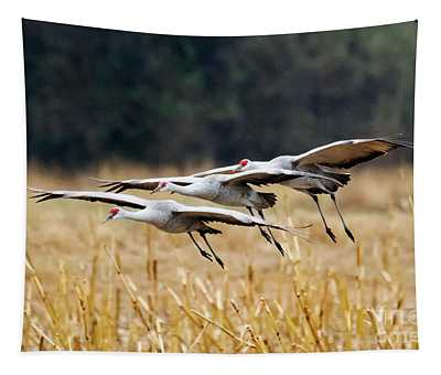 Tight Formation Tapestry
