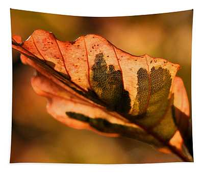 Tri-color Beech In Autumn Tapestry