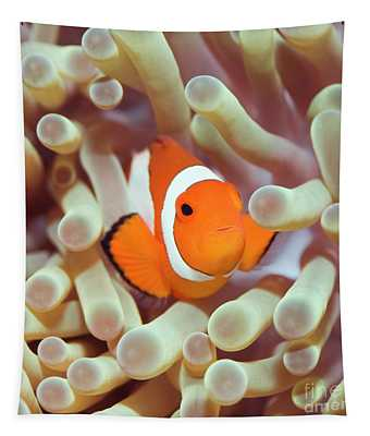 Tropical Fish Clownfish Tapestry
