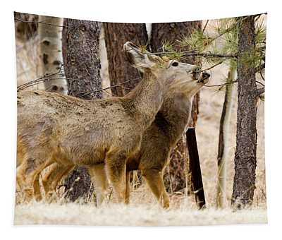 Mule Deer In The Pike National Forest Of Colorado Tapestry