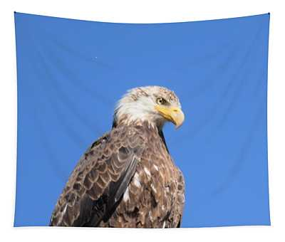 Bald Eagle Juvenile Perched Tapestry