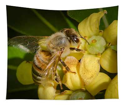 Bees Gathering From Pittosporum Flowers Tapestry