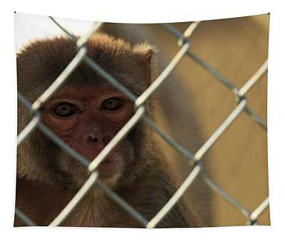 Caged Monkey Tapestry