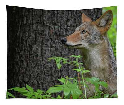 Early Morning Coyote In Maine Tapestry
