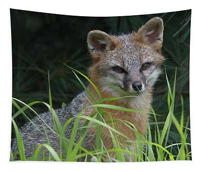 Gray Fox In The Grass Tapestry