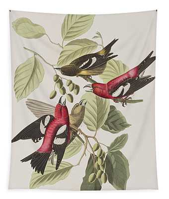 Crossbill Paintings Wall Tapestries