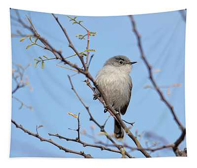 Black-tailed Gnatcatcher Tapestry