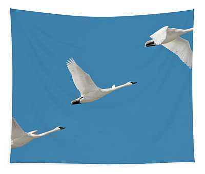 3 Montana Swans Tapestry