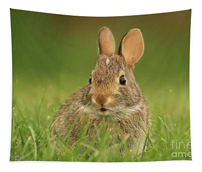 Young Cotton-tail Rabbit Tapestry