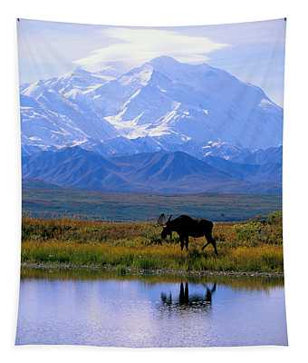 Wildlife Photographs Wall Tapestries