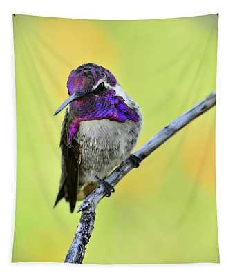 Costas Hummingbird  Tapestry