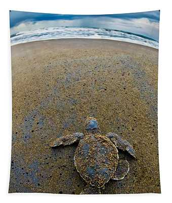 Green Sea Turtle Chelonia Mydas Tapestry