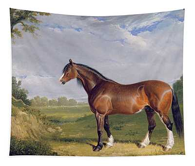 A Clydesdale Stallion Tapestry