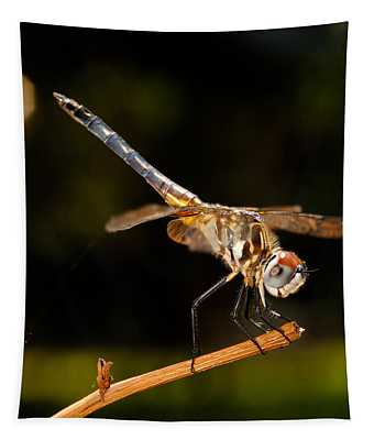 A Dragonfly Tapestry