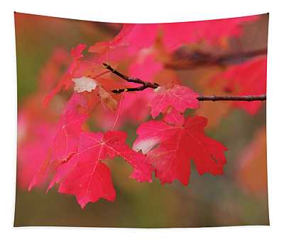 A Flash Of Autumn Tapestry