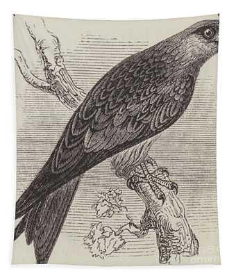 A Kite Tapestry