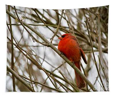 A Red Cardinal In Branches Tapestry