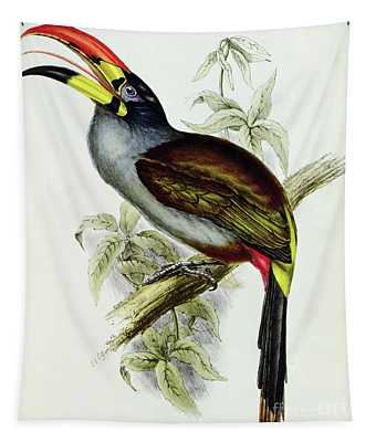 A Toucan  Pteroglossus Hypoglaucus From Tropical Birds Tapestry