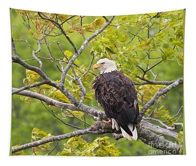 Adult Bald Eagle Tapestry