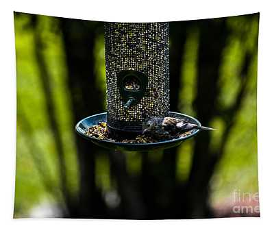 Tapestry featuring the photograph All You Can Eat Bird Feeder by Gary Keesler